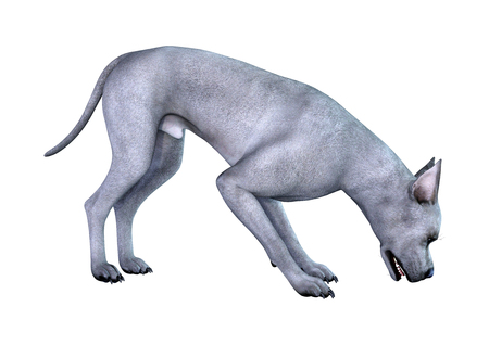 3D rendering of a blue Great Dane dog isolated on white background