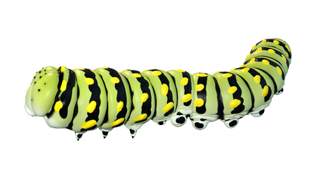 3D rendering of a green worm caterpiller isolated on white background