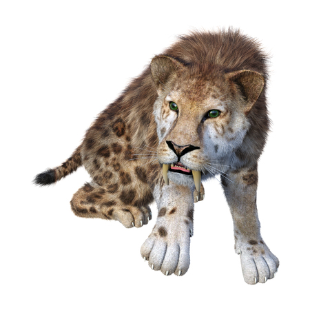 3D rendering of a sabertooth tiger on white 스톡 콘텐츠