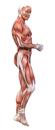 3D rendering of a male figure with muscle maps isolated on white background 版權商用圖片