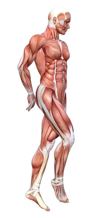 3D rendering of a male figure with muscle maps isolated on white background Stock Photo