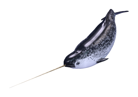 3D rendering of a male narwhal or Monodon monoceros, or narwhale isolated on white background Banco de Imagens - 122383469