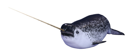 3D rendering of a male narwhal or Monodon monoceros, or narwhale isolated on white background Banco de Imagens
