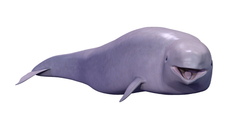 3D rendering of a narwhal calf or Monodon monoceros, or narwhale isolated on white background