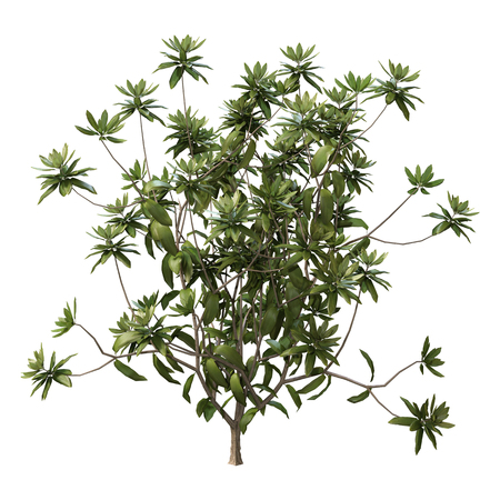 3D rendering of a rhododendron plant isolated on white background