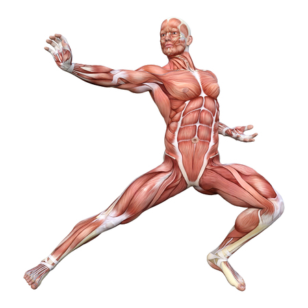 3D rendering of a male figure with muscle maps isolated on white background 免版税图像