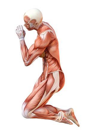 Representación 3D de una figura femenina con mapas musculares aislado sobre fondo blanco. Foto de archivo