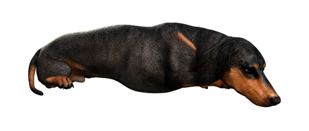 3D rendering of a dachshund  dog  isolated on white background