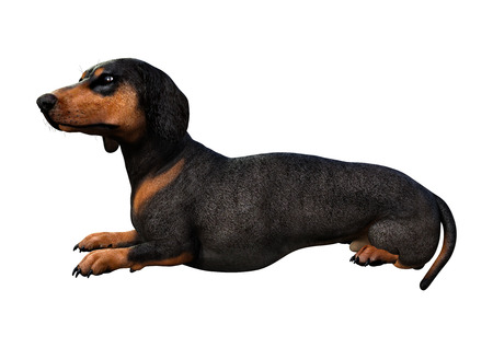 3D rendering of a dachshund dog isolated on white background Banco de Imagens - 124885814