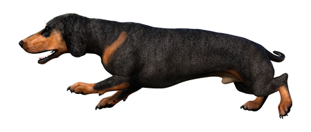 3D rendering of a dachshund dog isolated on white background Banco de Imagens