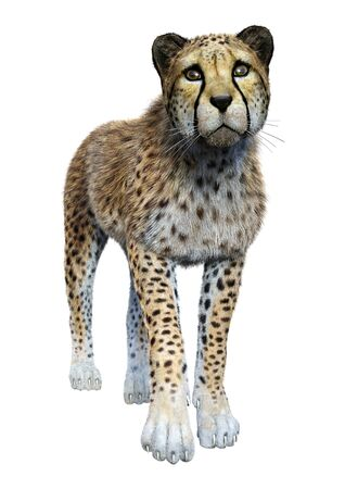3D rendering of a big cat cheetah isolated on white background Banco de Imagens - 124885909