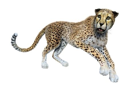 3D rendering of a big cat cheetah isolated on white background