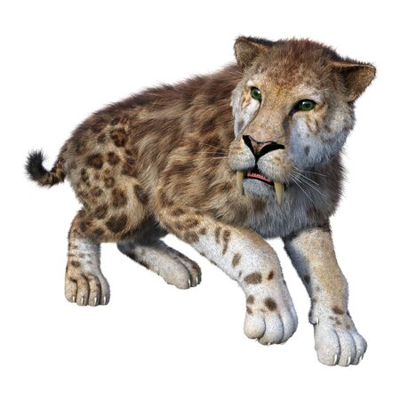 3D rendering of a sabertooth tiger on white Stock Photo