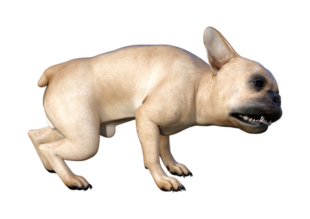 3D rendering of a fawn French bulldog isolated on white background
