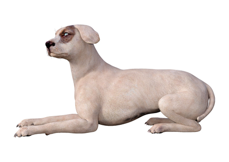 3D rendering of a crossbreed dog with blue eyes isolated on white background Imagens