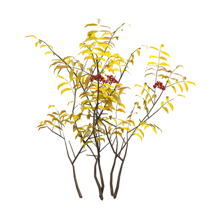 3D rendering of a yellow elderberry bush with red berries isolated on white background