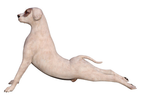 3D rendering of a crossbreed dog isolated on white background
