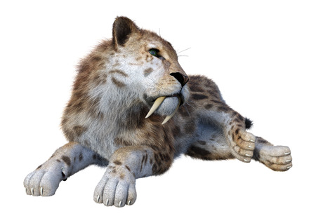 3D rendering of a sabertooth tiger isolated on white background 스톡 콘텐츠