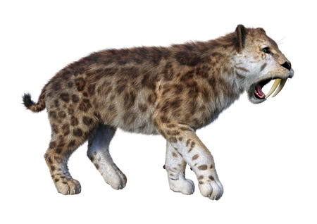 3D rendering of a sabertooth tiger isolated on white background 스톡 콘텐츠 - 129515538