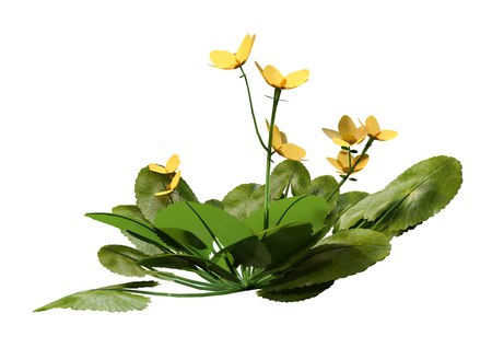 3D rendering of a Caltha palustris or marsh marigold or kingcup flowers isolated on white background Imagens