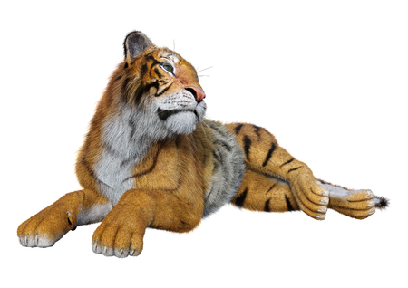 3D rendering of a big cat tiger isolated on white background Stock Photo - 130063947