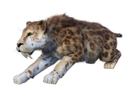 3D rendering of a sabertooth tiger isolated on white background Фото со стока