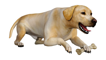 3D rendering of a yellow labrador dog isolated on white background 스톡 콘텐츠