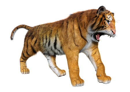 3D rendering of a big cat tiger isolated on white background