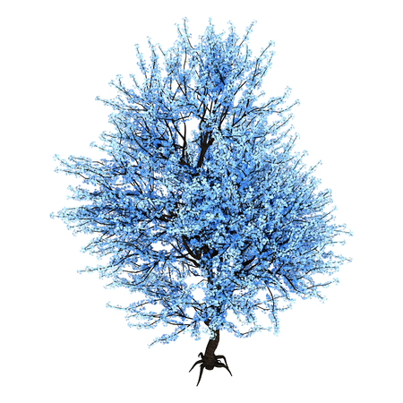 3D rendering of a blue blooming sakura tree isolated on white background