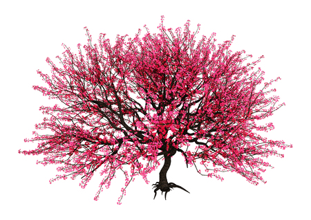 3D rendering of a red blooming sakura tree isolated on white background