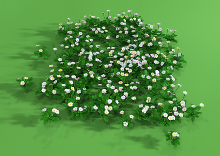 3D rendering of daisy flowers on green background