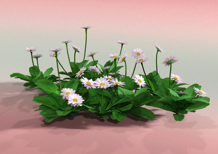 3D rendering of daisy flowers on pink background