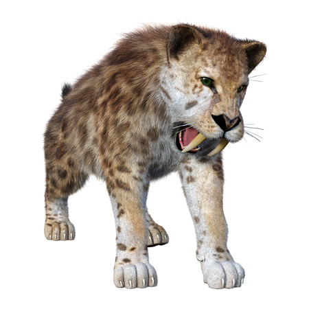 3D rendering of a sabertooth tiger isolated on white background Stock Photo