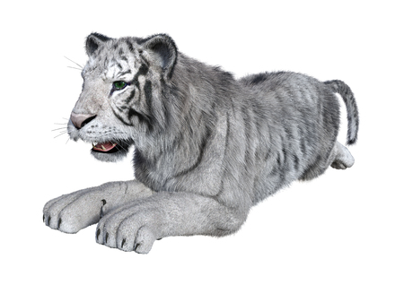 3D rendering of a white tiger isolated on white background