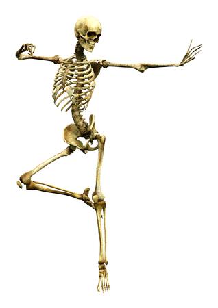 3D-Darstellung eines menschlichen Skeletts lokalisiert auf weißem Hintergrund Standard-Bild