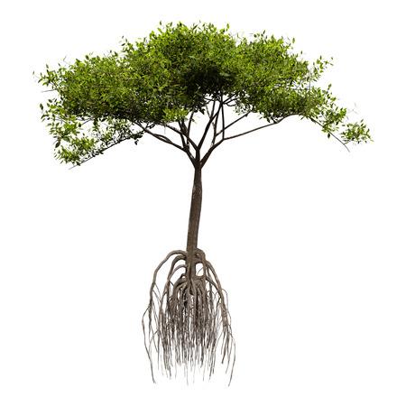 Representación 3D de un árbol de mangle verde aislado sobre fondo blanco.