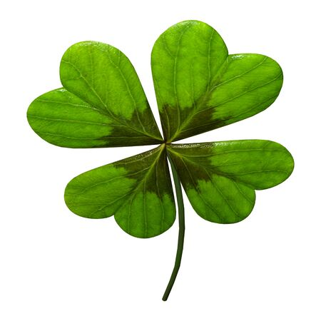 3D rendering of a green clover leaf isolated on white background