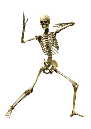 3D rendering of a human skeleton isolated on white background Zdjęcie Seryjne