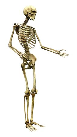 3D rendering of a human skeleton isolated on white background Stockfoto