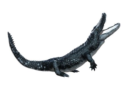 3D rendering of a black alligator isolated on white background Stock Photo