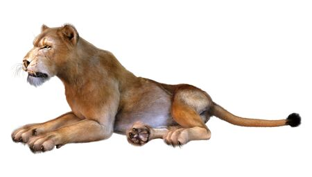3D rendering of a female lion isolated on white background