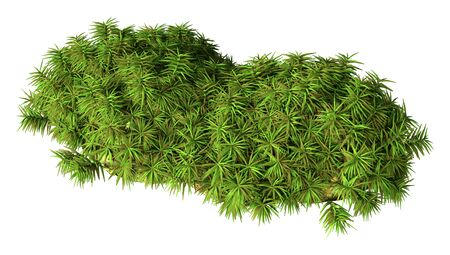 3D rendering of a green hummock moss isolated on white background Foto de archivo