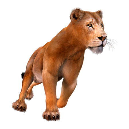 3D rendering of a female lion isolated on white background Reklamní fotografie