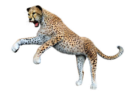3D rendering of a big cheetah isolated on white background