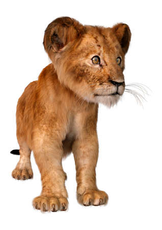 3D rendering of a cute lion cub isolated on white background Stockfoto