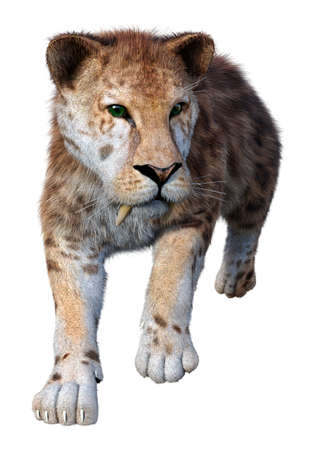 3D rendering of a sabertooth tiger isolated on white background