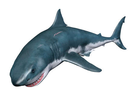 3D rendering of a great white shark isolated on white background