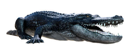 3D rendering of a black alligator isolated on white background