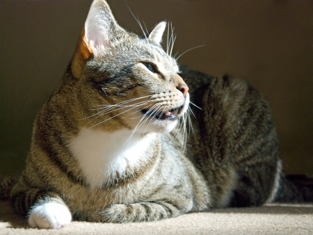 Beautiful cat sitting on the carpet Stock Photo