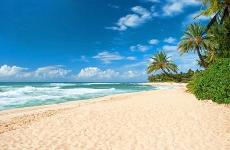 Ongerept zandstrand met palmbomen en azuurblauwe oceaan op achtergrond Stockfoto